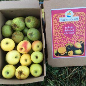 caja de carton con frutas, manzanas peras